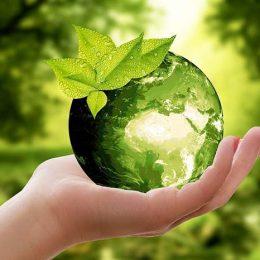 Экологическая викторина «Здравствуй, лето, зелёного цвета!»